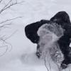 东北大妈用雪洗貂皮大衣